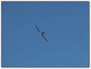 Обзор Top Flite Corsair 60 ARF
